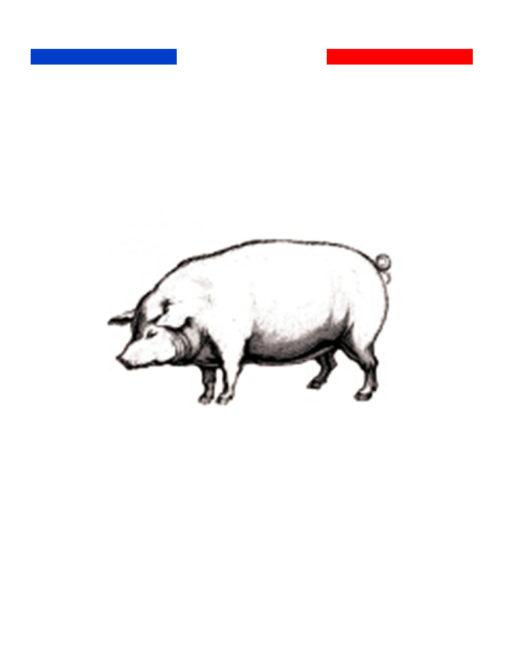 Tatouage cochon temporaire réaliste